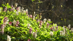 View Of A Fresh Spring Forest Stock Footage