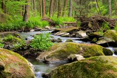 Small wild river in Bohemian forest Stock Photos