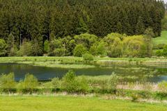 Beautiful summer rural landscape Stock Photos