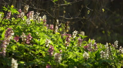 View Of A Fresh Spring Forest with lot of flowers Stock Footage