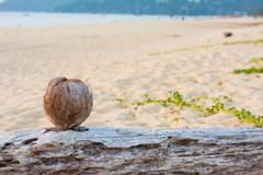 Coconut on the Andaman beach with Sunset Stock Photos