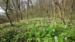 View Of A Fresh Spring Forest with flowers Stock Footage
