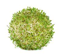 Alfalfa sprouts on white background Stock Photos