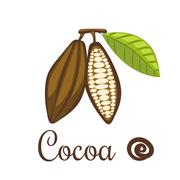 Cocoa beans vector illustration Stock Illustration