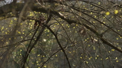 Early spring sprouting, pan movement Stock Footage