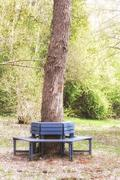 Bench around Oak tree Stem - stock photo
