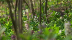 A Fresh Spring Forest with flowers, pan mevement Stock Footage