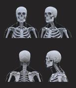 human skeleton anatomy on dark gray background - stock photo