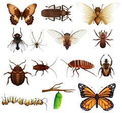 Different kind of wild insects - stock illustration