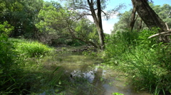 Beautifull View Of The Danube Floodplain Forest Stock Footage