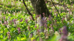 View Of A Fresh Spring Forest, pan movement Stock Footage