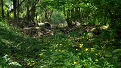 Floodplain Forest with spring flowers Stock Footage