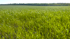 Landscape of a beautiful green field with grass swaying in the wind. Stock Footage
