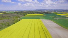 4K Yellow colza fields aerial shot Stock Footage