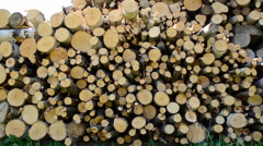 Firewood in the yard. Stock Footage