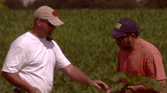 Farmer and consultant inspect corn plant roots 00003 Stock Footage