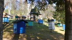 Bee garden. Beekeeping Stock Footage