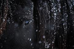 Eye of Friesian horse Stock Photos