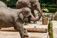 SINGAPORE - APRIL 14: Elephant show in Singapore zoo on April 14, 2016 in Sin Stock Photos