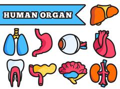 Human organ thin line illustration concept set - stock illustration