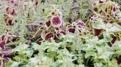 Flowering Garden - stock footage