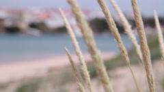 Beachgrass with beach in the background unfocused Stock Footage