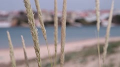 Beachgrass with beach in the background unfocused, slider shot Stock Footage