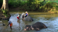 Elephant being washed by handler in pool, Sigiriya, Sri Lanka Stock Footage