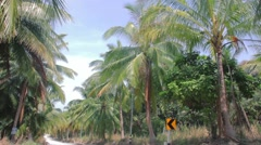 car on the tropic road driving in perspective - stock footage