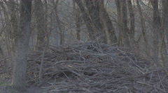 Beaver dam early spring - stock footage