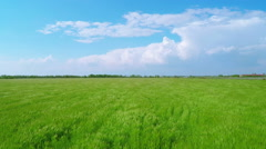 Flying over Green Wheat Fields Stock Footage
