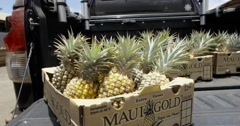 4K UHD: Pineapples On Tail Gate of Truck/Motion Tracking Stock Footage