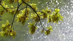 Petals of a Tree Swaying in the Wind. on the Background Working Fountain. Stock Footage