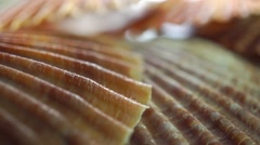 Flat shells macro pan video Stock Footage