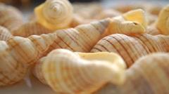 Small light shells macro pan video - stock footage