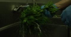 4K: Washing Fresh Organic Greens Stock Footage