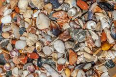 Assorted seashells and pebbles, perfect background for your concept or project Stock Photos