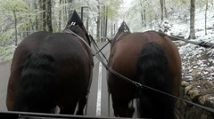 Croup Two Brown Horses During Walk. Stock Footage