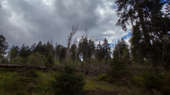 Sun and clouds timelapse wild mountain range Harz forest wide angle Stock Footage
