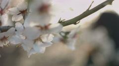 Beautiful girl posing in blooming almond trees Stock Footage