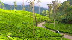 Tuk Tuks on road winding through tea estate, Highlands, Sri Lanka - stock footage
