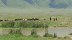 Masai shepherdess with a herd of goats in Ngorongoro crater Tanzania - 4K Stock Footage