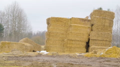 The piles of hays in the ground Stock Footage