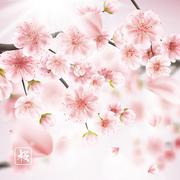 Cherry blossom realistic, sakura. EPS 10 - stock illustration