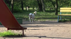 White stray dog walking on playground in city park, homeless, wild, 4k Stock Footage