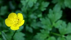 yellow summer flower - stock footage
