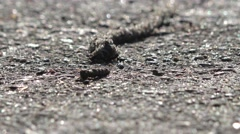 Earthworm crawling on asphalt in park after rain, macro, 4k Stock Footage