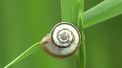 Small crawl snail sitting on blade of grass on green background, macro, 4k Stock Footage