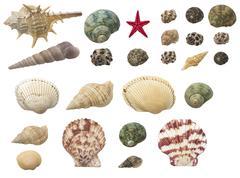 shells set isolated on white background - stock photo