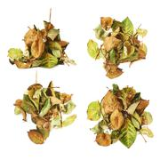 Pile of dried rose leaves as an abstract composition over white background Stock Photos